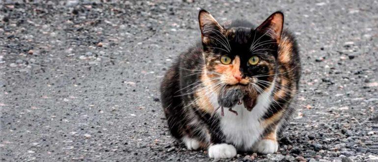 Кот поймал мышь