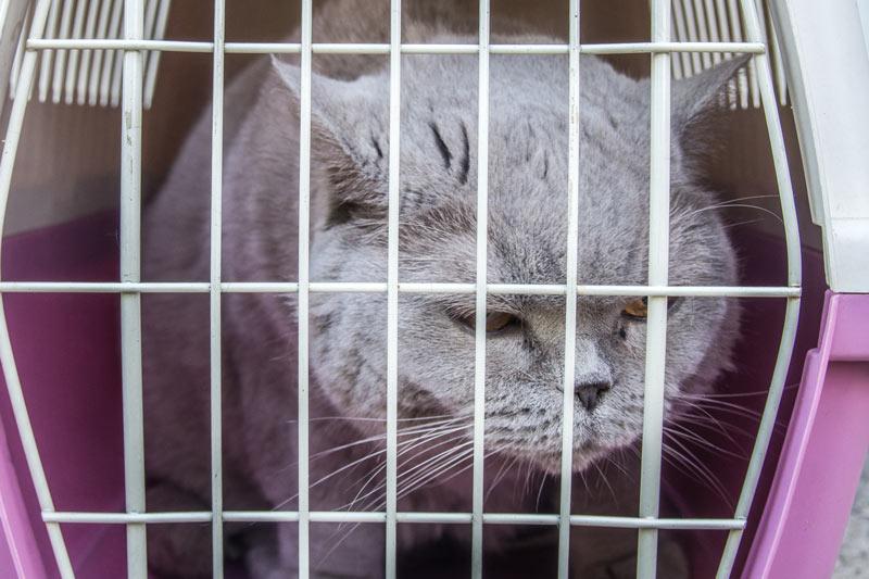 как изолировать кошку