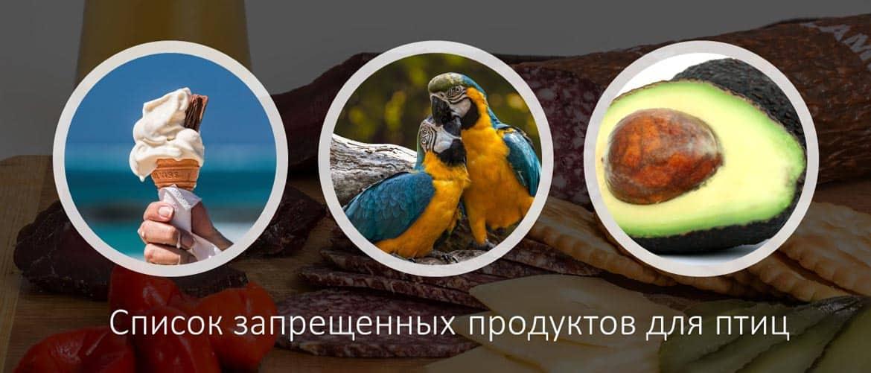 Запрещенные продукты для птиц