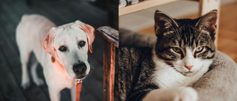 Чем нельзя кормить собак и кошек