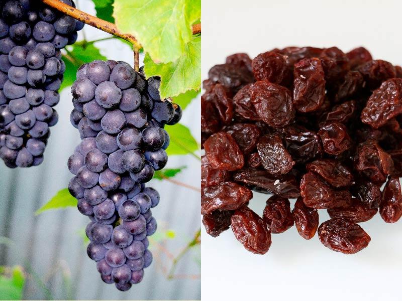 Изюм и виноград