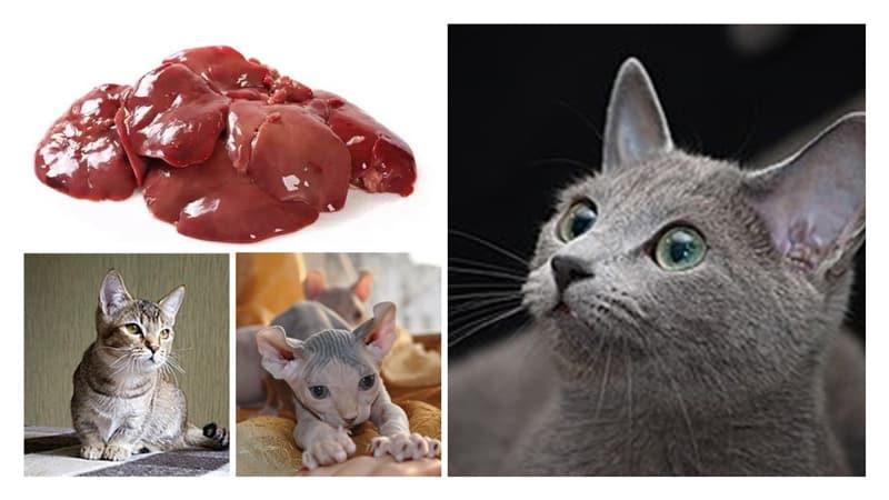 куриная печень и кошки