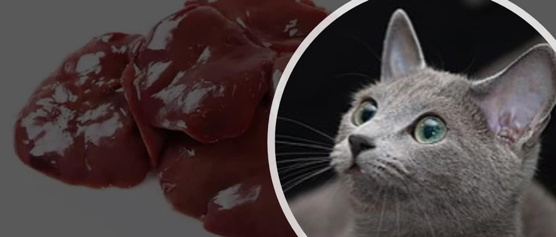 можно ли кошкам куриную печень